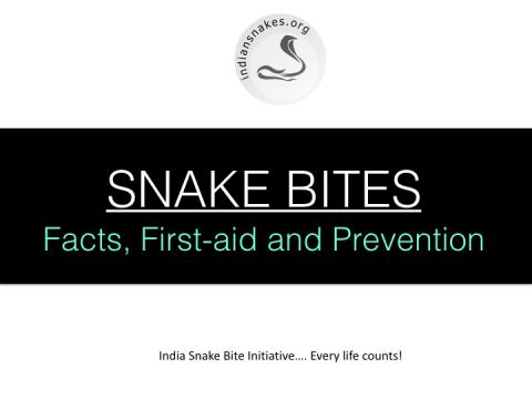 snake bite first aid prevention